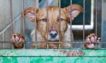 Traffi co di animali: un grave reato